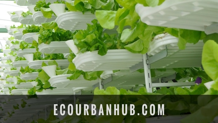 Vertical Farming Market Growth Statistic - Eco Urban Farming